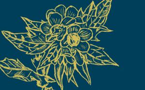 Dessin d'une plante Jusquiame Noire en or sur fond bleu foncé