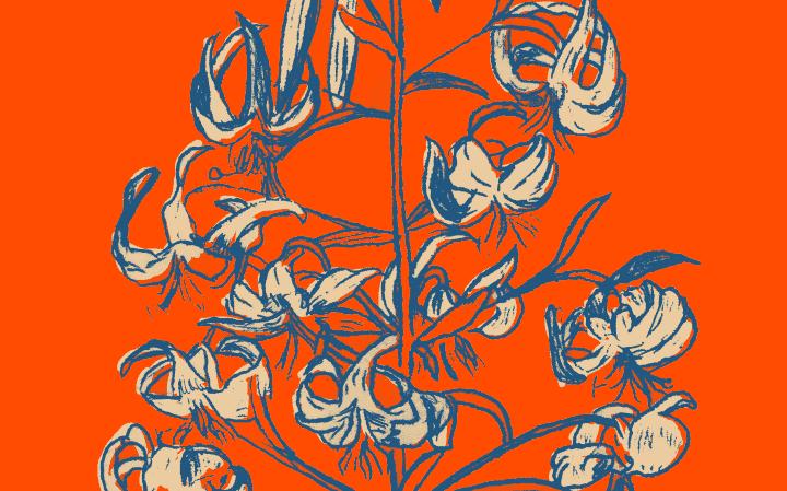 Dessin d'un Lys en bleu foncé avec les fleurs couleurs crème sur fond orange