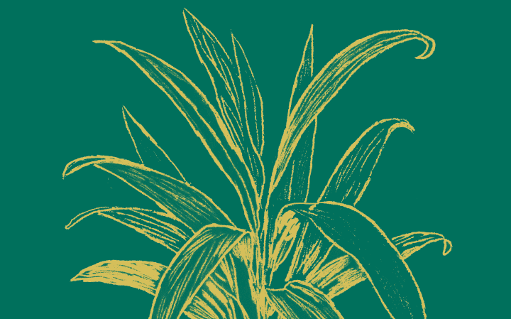 Dessin d'une ti plant en or sur fond vert