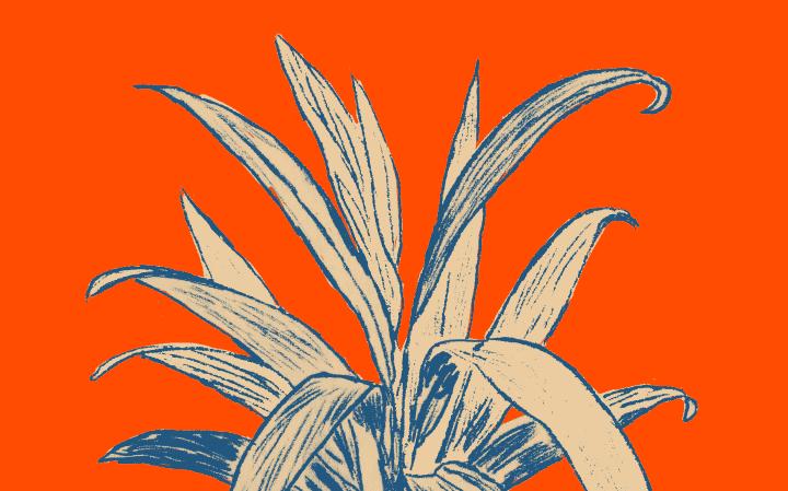 Dessin d'une Ti Plant en bleu foncé avec l'intérieur des feuilles couleurs crème sur fond orange