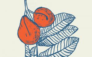 Dessin d'une plante de Goyavier en bleu foncé avec les fruits oranges sur fond creme